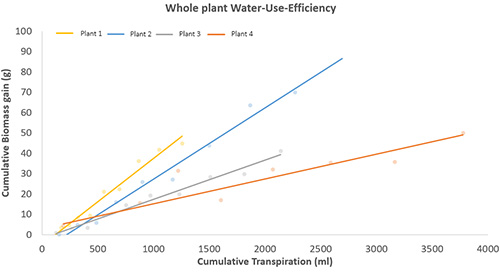 The linear relationship between biomass gain and transpiration of different introgression lines of tomato (Solanum lycopersicum). The slope of the lines indicates the whole plant water-use efficiency.